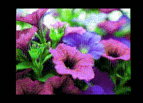 pink-purple-flowers-hd_out.png
