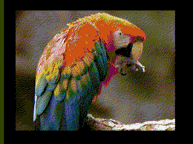 scarlet_macaw_640x200_out.png